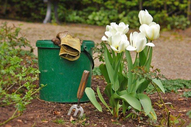 kbelík a tulipány