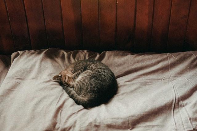 Prúžkovaná mačka schúlená v klbku leží na posteli.jpg