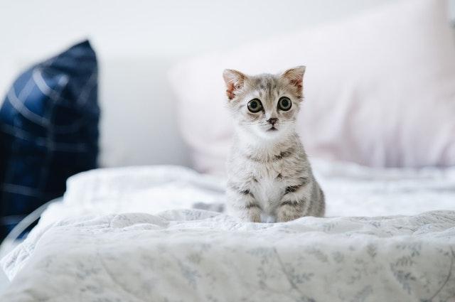 Mačiatko s veľkými očami sedí na posteli.jpg