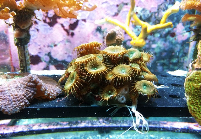 Farebné akvárium so sasankou a koralmi.jpg